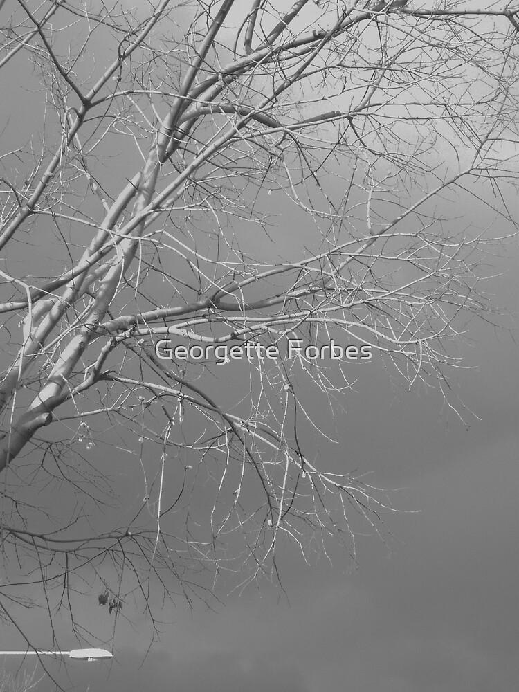 'sky speaks_street whispers'. Albury Australia by Georgette Forbes