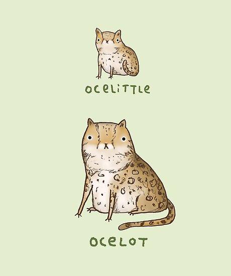 Ocelittle Ocelot by Sophie Corrigan