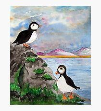 A Puffin Paradise Photographic Print