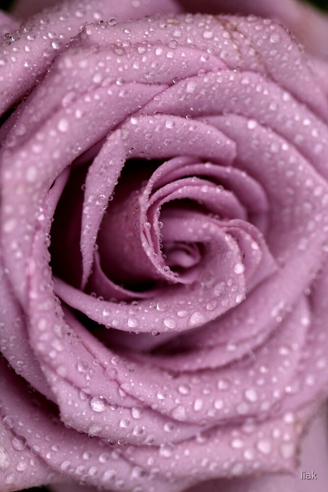 roses are violet by liak