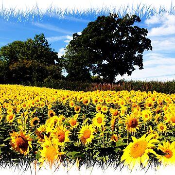 Sunflowers by Focal-Art