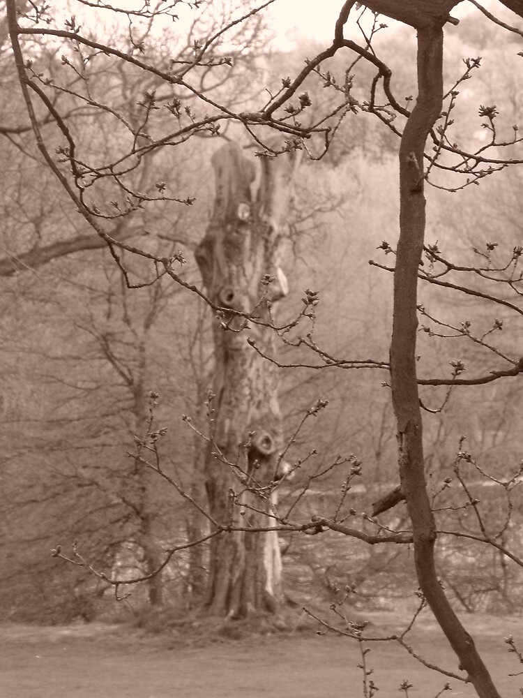 Tree's at Cawthorne by CharcoalPoet