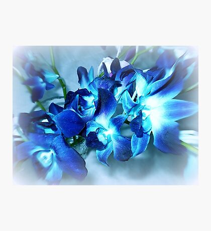 Singapore Orchids- in Blue Photographic Print
