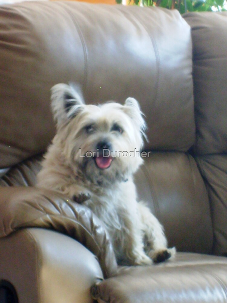 A dogs best friend (The couch) by Lori Durocher