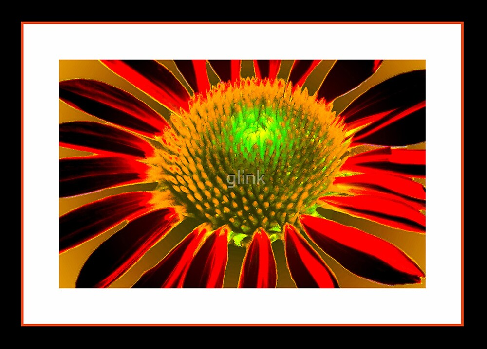 Flowering Contrast by glink