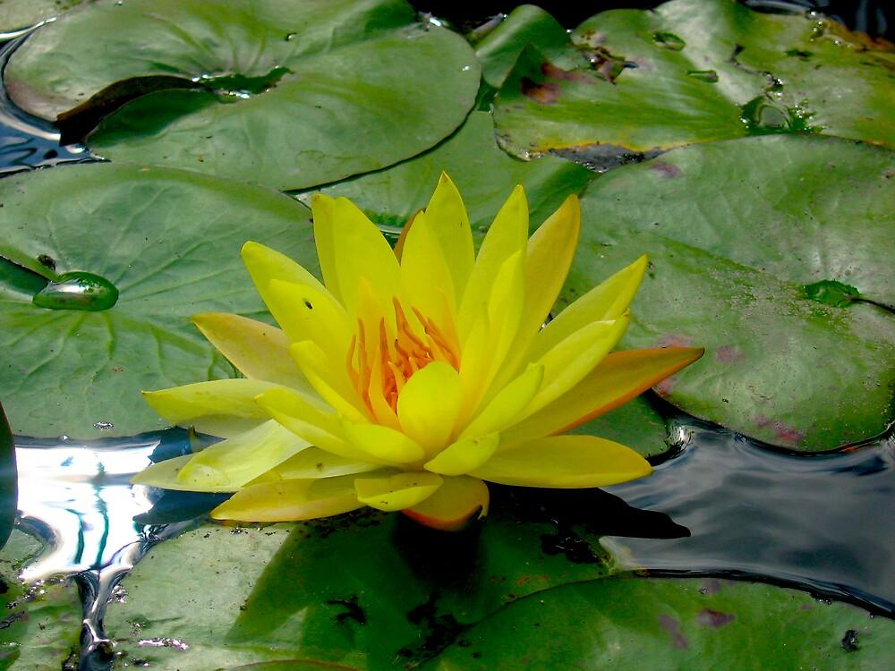 yellow lotus by geikomaiko
