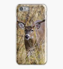 Buck in the Tall Grass iPhone Case/Skin