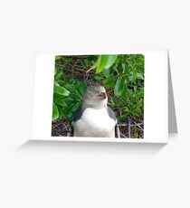 Yellow-Eyed Penguin Greeting Card