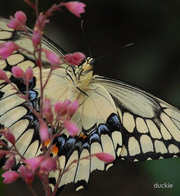 butterfly in a flower by duckie