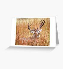 Texas White Tail Greeting Card