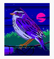 Evening Sparrow Photographic Print