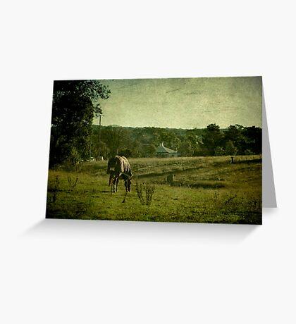 Grazing - Uralla, Northern Tablelands, NSW, Australia Greeting Card