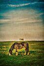 Ponies on Harlow Common by Nigel Bangert