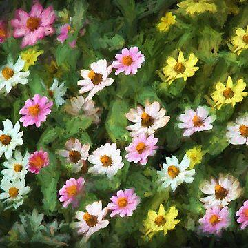 Colorful Zinna Flower Mix by wcpadgett