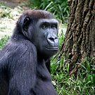 Chimp by jarrodb