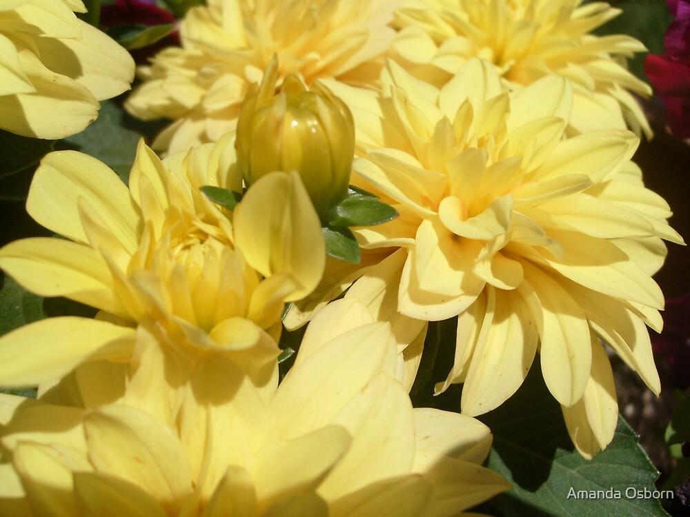 yellow :) by Amanda Osborn