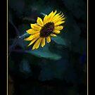 Sunflower Yellow Blast by wcpadgett