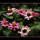 Rainy Moss Rose by wcpadgett