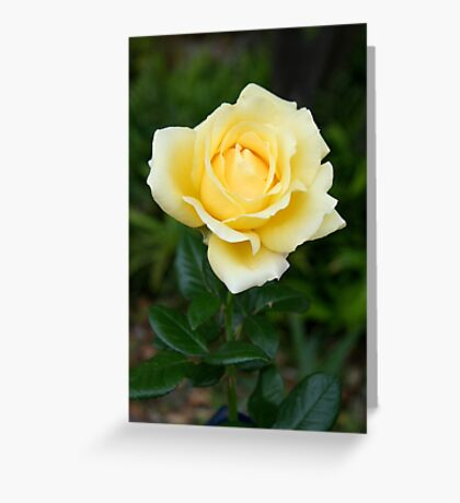 Judith's rose Greeting Card