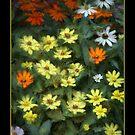 Yellow Flower Splendor by wcpadgett
