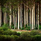 Big Brook Forest by Louise Cooke