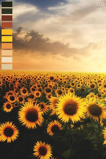 Quot Aesthetic Sunflower Palette Quot Poster By Yungslo Redbubble