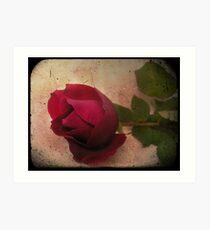 Forgotten Rose Art Print
