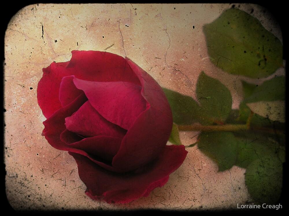 Forgotten Rose by Lorraine Creagh