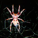 that would be Mr Wincy to you...so what kind of spider is mr Wincy? by Christopher Birtwistle-Smith