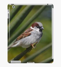 Sparrow and the Spike iPad Case/Skin