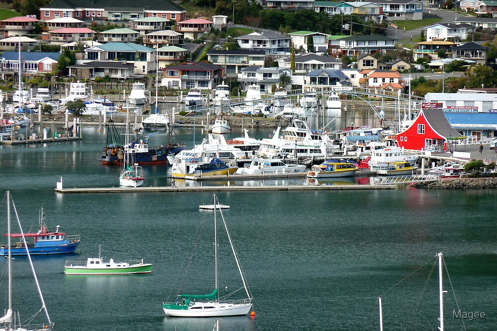 Picture perfect Picton NZ by Magee