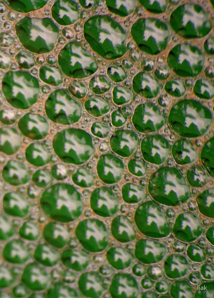 water bubbles by liak