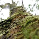 Symbiotic in Rainforest by eyes4nature