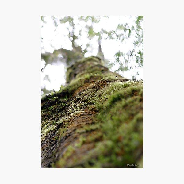Symbiotic in Rainforest Photographic Print