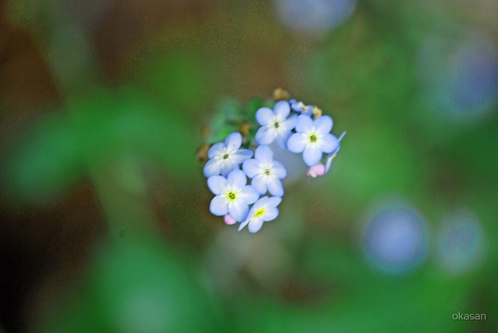 forget me not by okasan