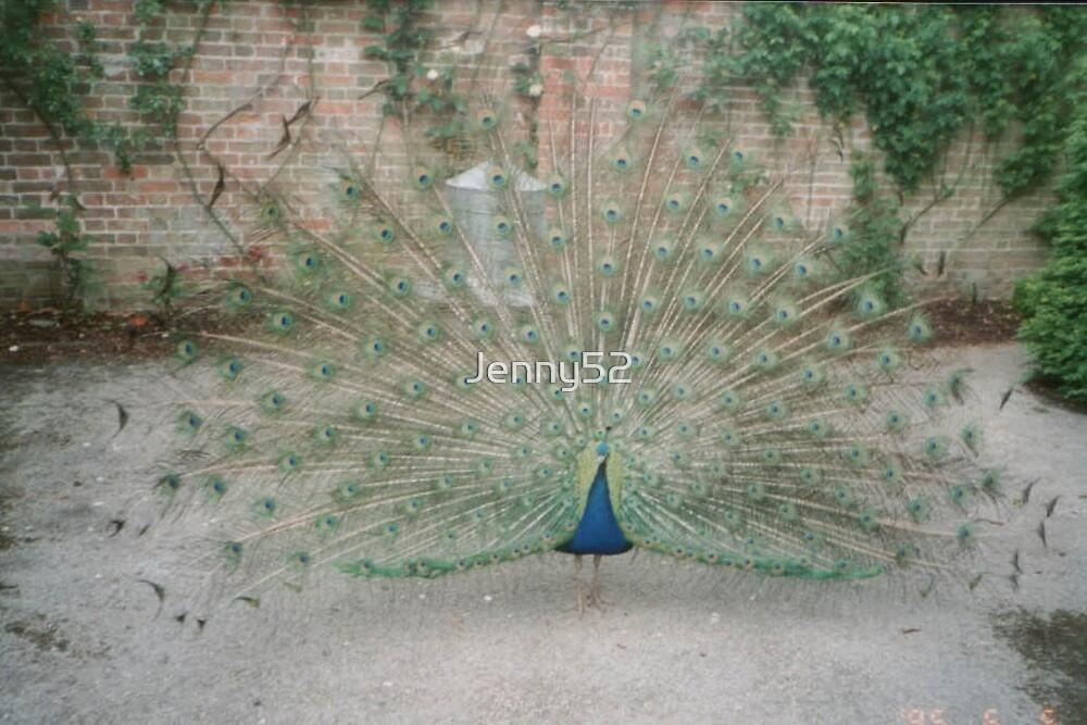 Peacock by Jenny52