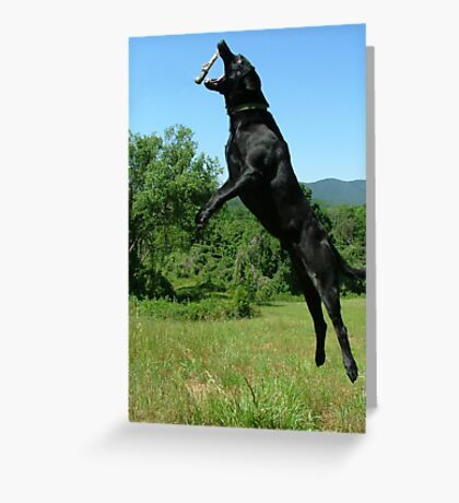 Get The Stick! Greeting Card