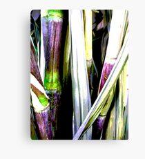 Raw Sugar Canvas Print