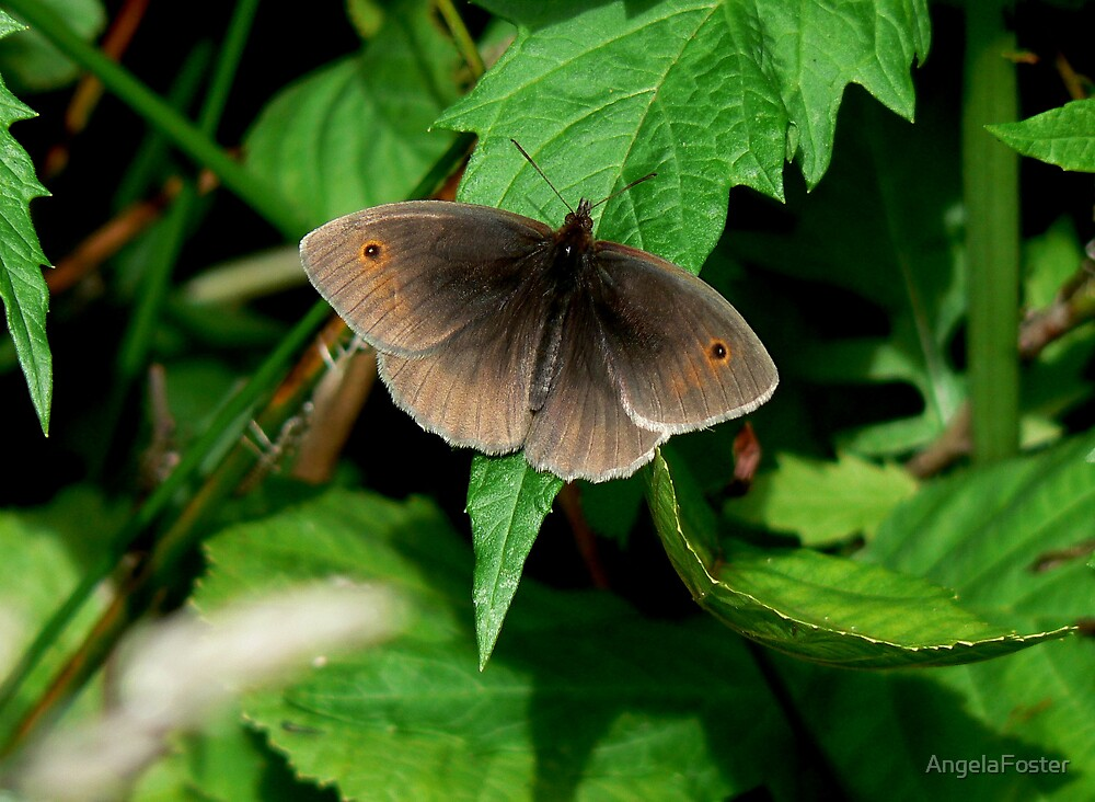Meadow Brown Butterfly by AngelaFoster
