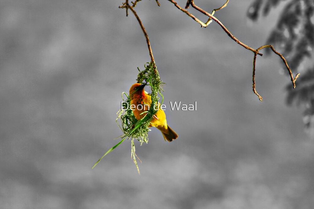 Fickle Finch by Deon de Waal
