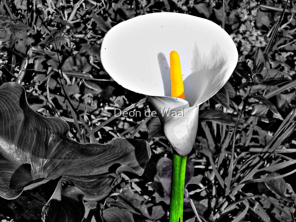Colour me Yellow by Deon de Waal