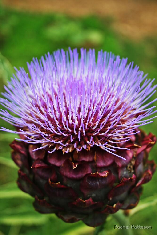 A Bloomin Artichoke by Rachel Patteson