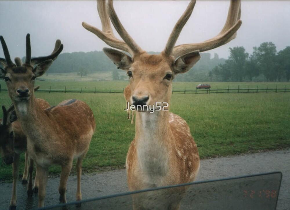 Deer by Jenny52