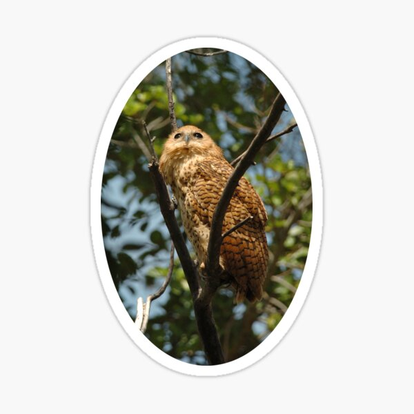 Pel's Fishing Owl portrait Sticker