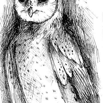 owl sketch by agiaputri