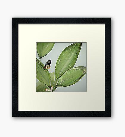 Spring Butterfly Framed Print