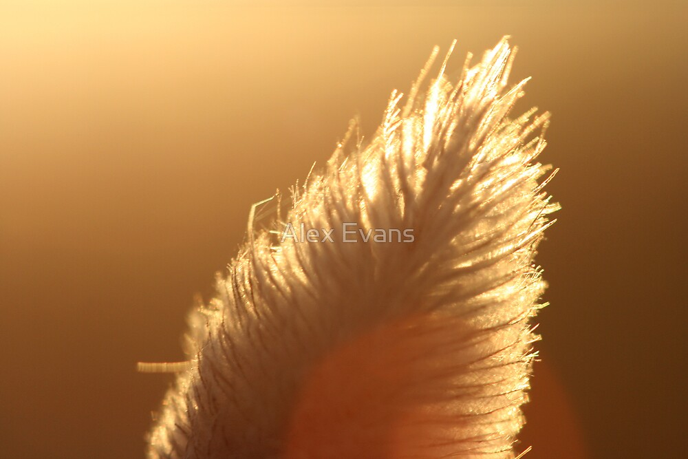 Macro Bunny Tail by Alex Evans