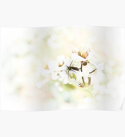 Rocket Flower Poster