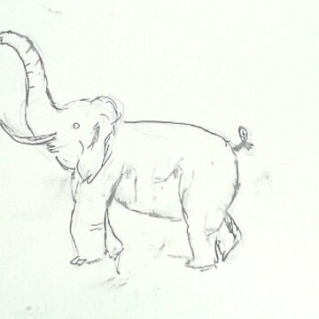 Black and white sketched Elephant by dinelson