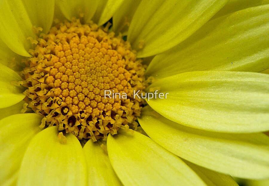 Yellow by Rina  Kupfer